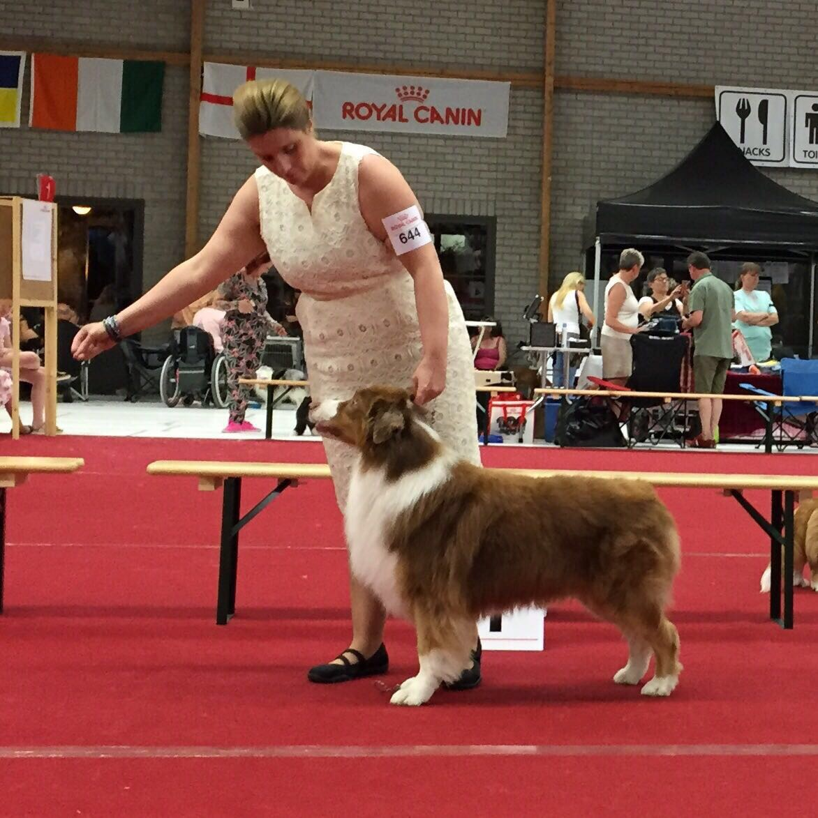 Roses and Dreams Australian Shepherds - Int Dogshow Oss 2017